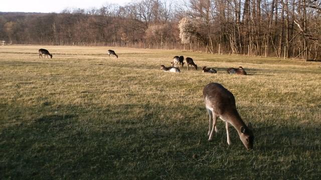 Lainzer Tiergarten 14.03.2020