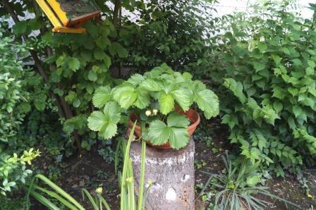 Garten012 kl